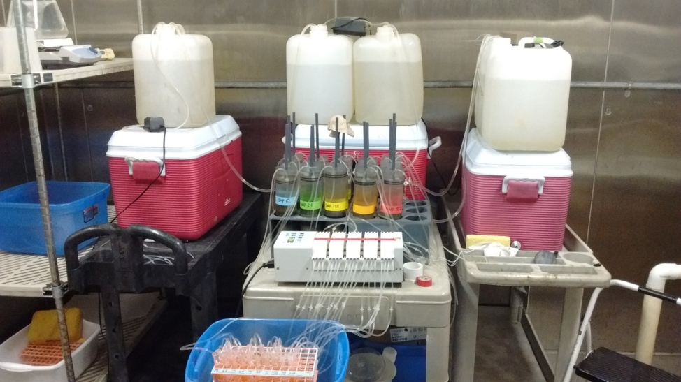 Laboratory set up at UNC IMS. Sediment cores (cylinders with different color tape) hooked up to a pump (white box at front) that pulls water from the sediment surface.